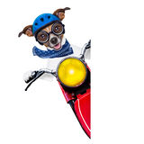 Motorbike dog Royalty Free Stock Image