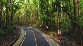 Motorbike or moped drive narrow asphalt road in a dense jungle forest. Man-made forest, Philippines, Bohol