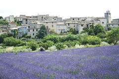 Motorbike tour french lavender fields Stock Photography