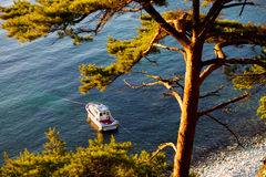 Motorboat in a bay. With pine tree at the coast royalty free stock images