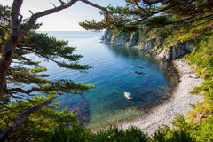 Motorboat in a bay with pine tree Royalty Free Stock Image