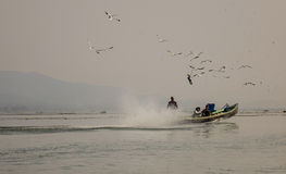 Motorboat with the birds on lake in Inlay, Myanmar Royalty Free Stock Photo
