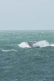 A motorboat on the English Channel. A motorboat sailing on the English Channel royalty free stock images