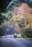 Motorcycle biker riding on asphalt highway with wild himalayan c Stock Images