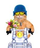 Motorcycle cat . Stock Photo