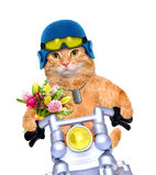 Motorcycle cat . Isolated on white Royalty Free Stock Photos
