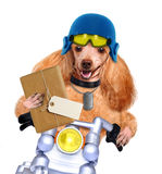 Motorcycle dog. Isolated on white stock photos