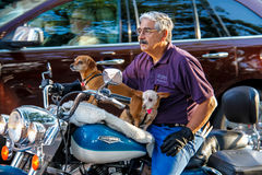 Motorcycle Dogs Stock Images