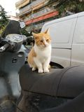 Motorcycle kitty royalty free stock image