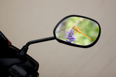 Motorcycle mirror and dragonflies inside. Stock Image