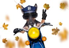 Free Motorcycle  Police Dog On Autumn Or Fall Royalty Free Stock Image - 161807936