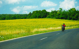 Motorcycle rider and sunflowers. Motorcycle rider on road and sunflowers royalty free stock photography