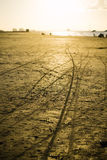 Motorcycle tracks in the golden beach sand Stock Photos