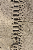 Motorcycle tyre tracks. Texture of sand with motorcycle tyre tracks Stock Photo