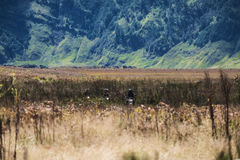 Motorcyclist group adventure riding in natural field in Indonesia Royalty Free Stock Photos