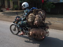 Motorcyclist with pigs Royalty Free Stock Image