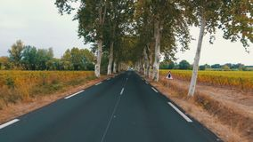 The motorcyclist rides between the trees along the scenic road in France. POV. The motorcyclist rides between the trees along the scenic road in France. Provence stock video