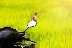 Motorcykel i fältet Arkivbilder