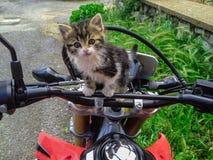 Motorcykeltur med den gulliga katten Royaltyfri Bild