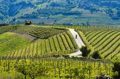 Motorcyklist på vägbortgången till och med vingårdarna Royaltyfria Bilder