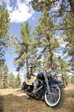 Motorfiets met het berijden van handschoenen en jasje in het bos plaatsen Royalty-vrije Stock Afbeeldingen