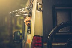 Motorhome που ταξιδεύει με τη Pet Στοκ εικόνες με δικαίωμα ελεύθερης χρήσης