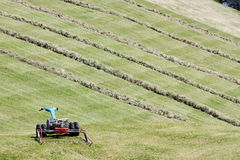 Motorised mower and rows of cut hay windrow Royalty Free Stock Photography