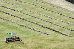Motorised mower and rows of cut hay windrow Stock Photography