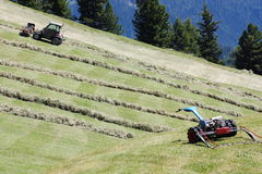 Motorised mower, swather and rows of cut hay windrow Royalty Free Stock Photo