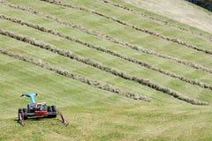 Motoriserad gräsklippningsmaskin och rader av klippt hö & x28; windrow& x29; Arkivbild