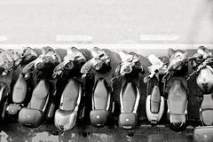 Motoriska sparkcyklar som parkerar i Italien royaltyfri fotografi