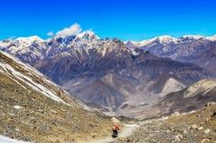Motorista de la montaña en montañas de Himalaya Fotografía de archivo