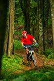 Motorista de la montaña que monta abajo de Forest Trail Foto de archivo