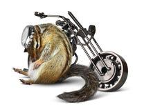 Motorista divertido del chipmunk con la motocicleta Fotografía de archivo