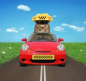 Motorista do gato na estrada foto de stock royalty free