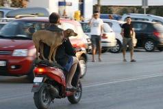 Motorista y perro en el camino Imagenes de archivo