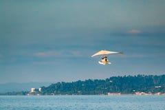 Motorized Hang Glider Flying In Sunny Sky. Motorized Hang Glider Flying In Blue Sunny Sky Stock Photo