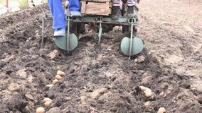 Motorized Seeding Process. Dropping of Potato. 4K UltraHD, UHD stock video