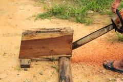 Motosega di legno di sawing dell'uomo Fotografia Stock Libera da Diritti