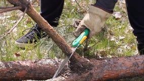 Motosega di legno di sawing dell'uomo Un uomo forte con una sega sega i rami di un albero L'abete rosso si trova sulla terra Indi stock footage