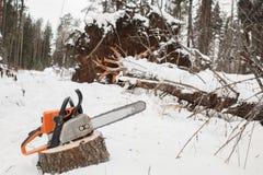 Motosierra en tocón del pino el árbol caido en invierno Imagen de archivo libre de regalías