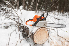 Motosierra en tocón del pino el árbol caido en invierno Fotografía de archivo