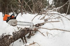 Motosierra en tocón del pino el árbol caido en invierno Imagenes de archivo