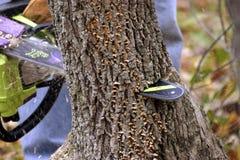 Motosierra a través del árbol Imagen de archivo libre de regalías