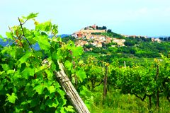Motovun in Istria, Croatia. Vineyard landscape in Istria, Croatia, town Motovun on the hill in background stock image