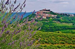 Motovun Istria, Kroatien, Europa royaltyfria foton