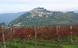 Motovun and Vines Royalty Free Stock Photos
