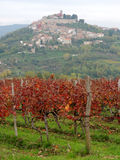 Motovun and Vines Stock Photography