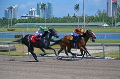 Motown Man Holding on the Win. Motown Man post position number six horse winning in a closely contested on mile race on dirt at Gulfstream Park,Hallendale royalty free stock photography