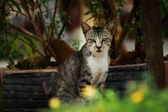 Motret crew | cat Stock Photo